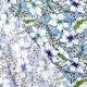 Tissu Viscose Hibiscus & Fleurs - Bleu